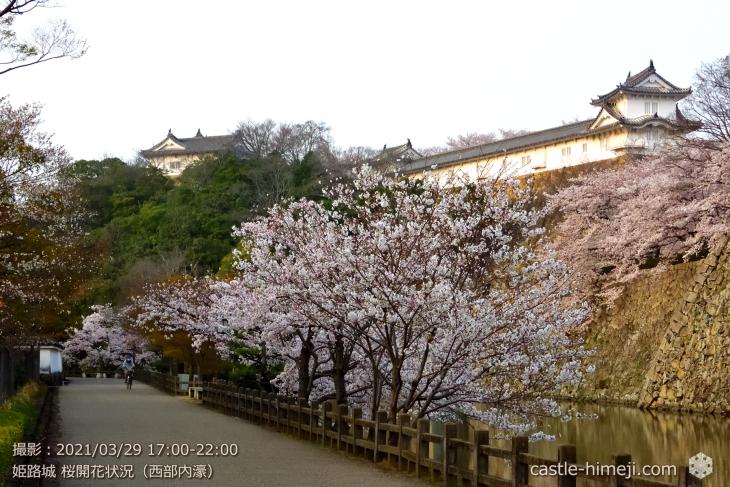 02_西部内濠小道・姫路城・2021.3.29桜開花状況
