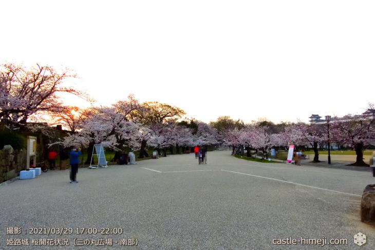 04_三の丸広場-南・姫路城・2021.3.29桜開花状況