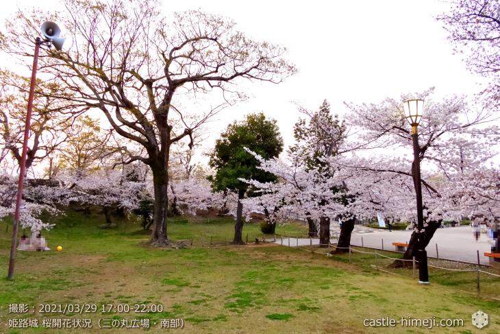 06_三の丸広場-南より西・姫路城・2021.3.29桜開花状況
