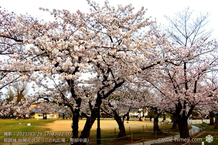 08_三の丸広場-南西より東中道・姫路城・2021.3.29桜開花状況
