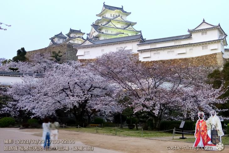 13_退場口付近・姫路城・2021.3.29桜開花状況