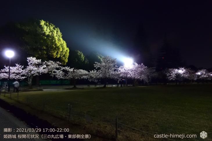 17_三の丸広場-東夜桜・姫路城・2021.3.29桜開花状況