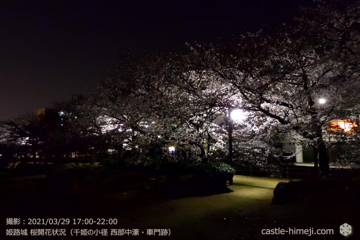 18_中濠千姫の小径南-車門跡・姫路城・2021.3.29桜開花状況