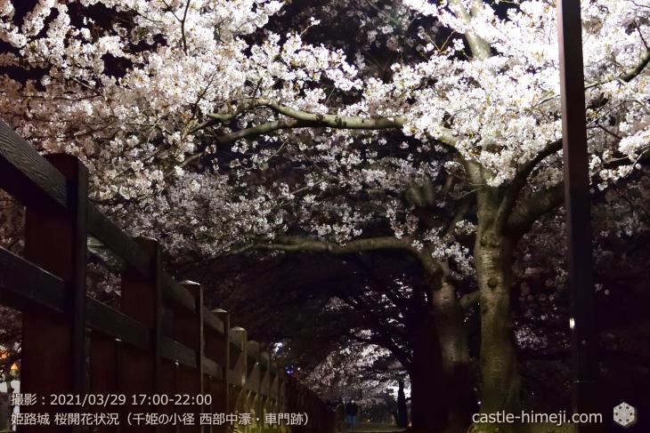 19_中濠千姫の小径南-車門跡・姫路城・2021.3.29桜開花状況