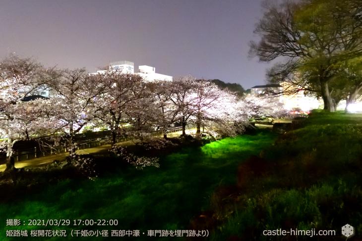 20_中濠千姫の小径南-車門跡を埋門より・姫路城・2021.3.29桜開花状況