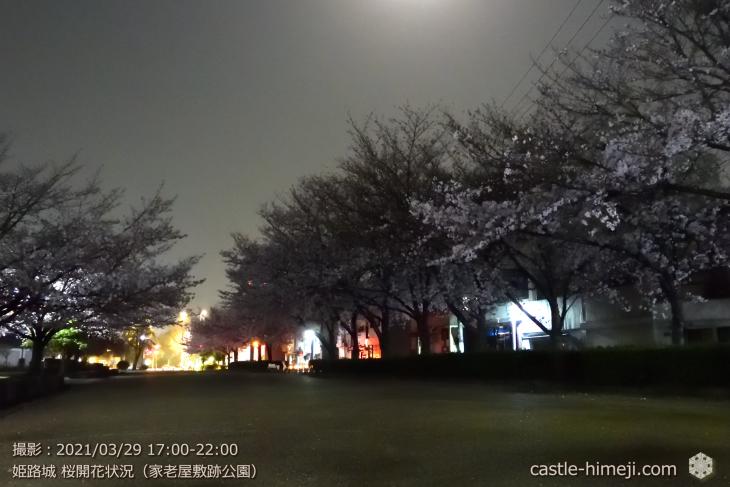 21_家老屋敷跡公園-西より東・姫路城・2021.3.29桜開花状況